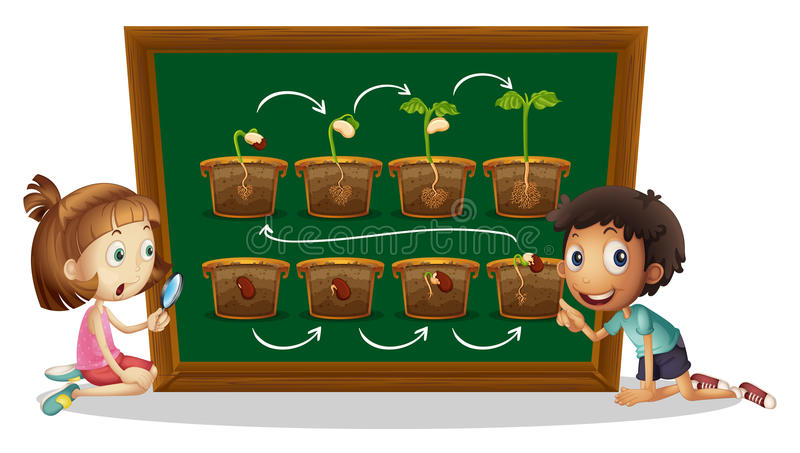 Boy and girl looking at plant diagram vector illustration