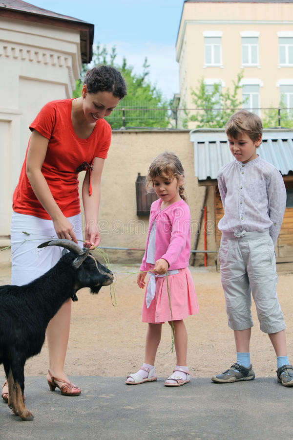Download Boy, Girl And Mother, Feed Mountain Goat Stock Image - Image: 20004399