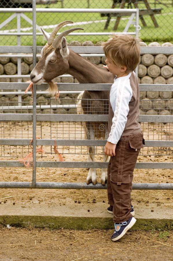 Download Boy and Goat stock image. Image of livestock, touch, friends - 6472599