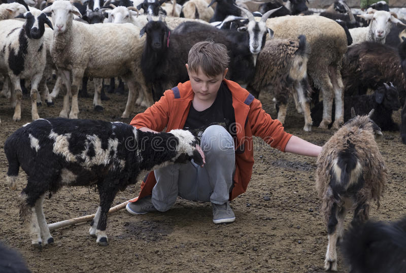 Boy and a goat royalty free stock photo