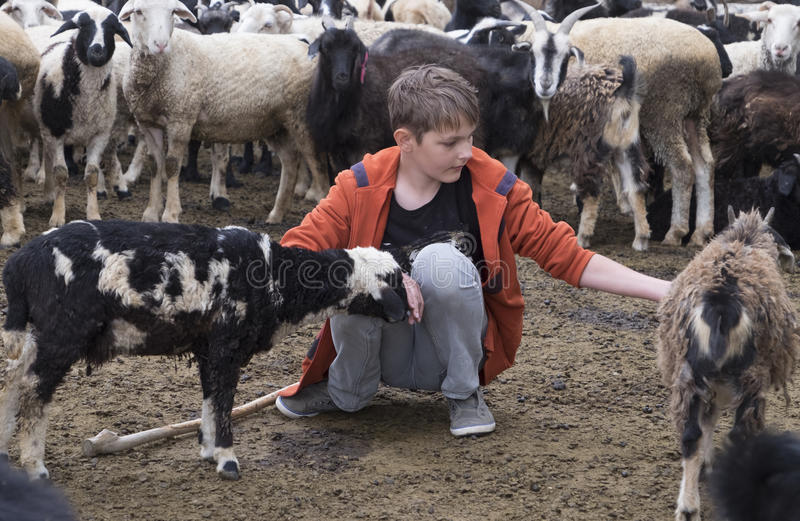 Boy and a goat royalty free stock photos