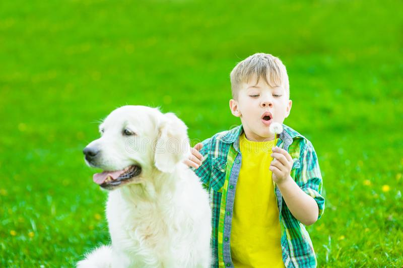 Boy with golden retriever dog blowing dandelion royalty free stock photos