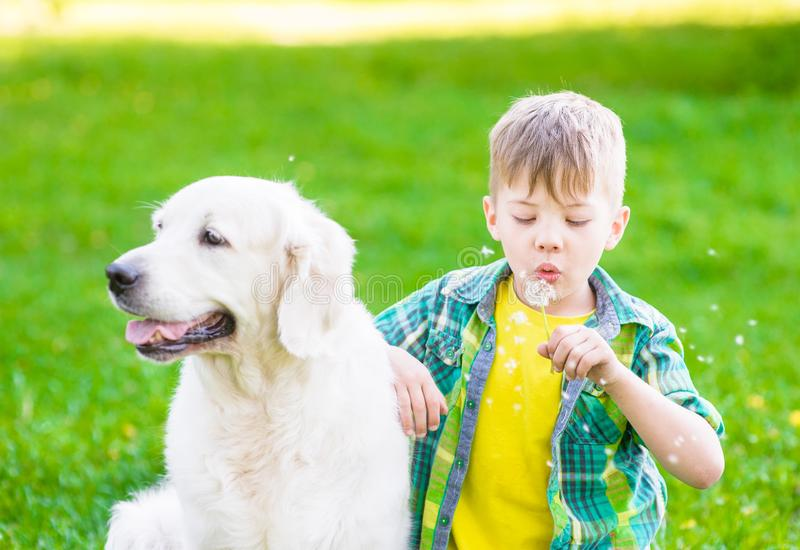 Boy with golden retriever dog blowing dandelion stock photography