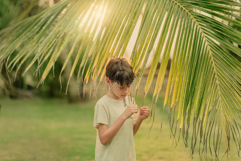 The boy on the green grass holding a palm branch. On a Sunny summer day on green grass boy and a large palm branch stock photos