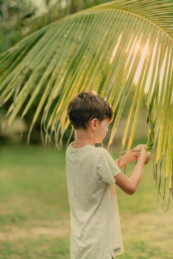The boy on the green grass holding a palm branch. On a Sunny summer day on green grass boy and a large palm branch stock images