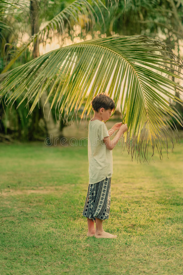 The boy on the green grass holding a palm branch. On a Sunny summer day on green grass boy and a large palm branch stock image