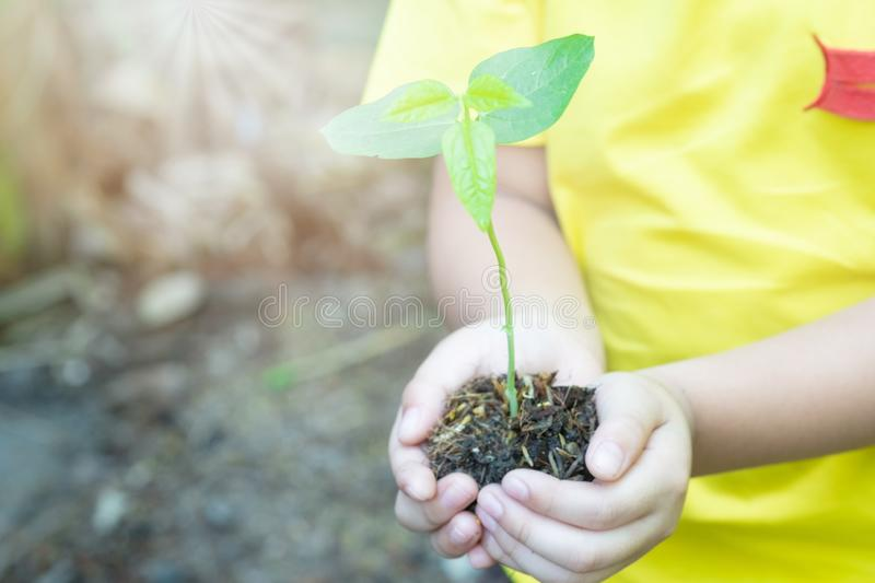 Boy hands planting the seedlings into the soil over nature background and sunlight. Farmer holding Young plant, new life growth. Ecology, money saving stock photo