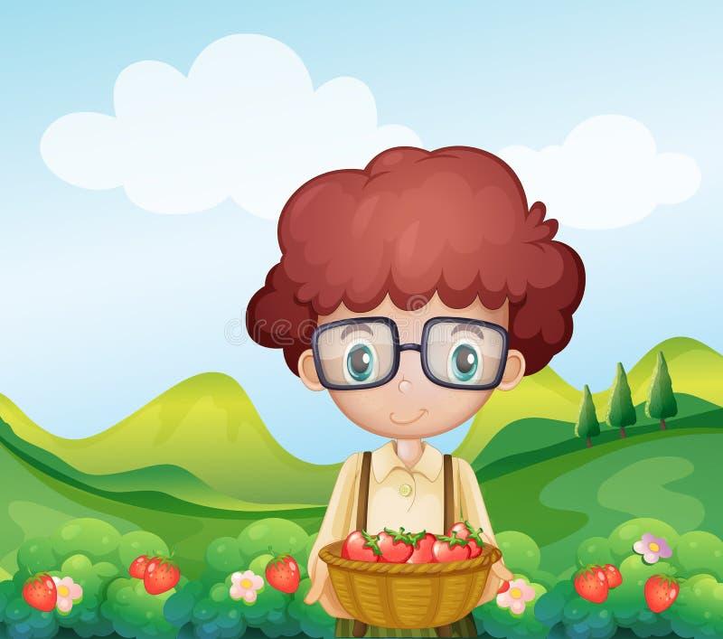 A boy harvesting strawberries vector illustration