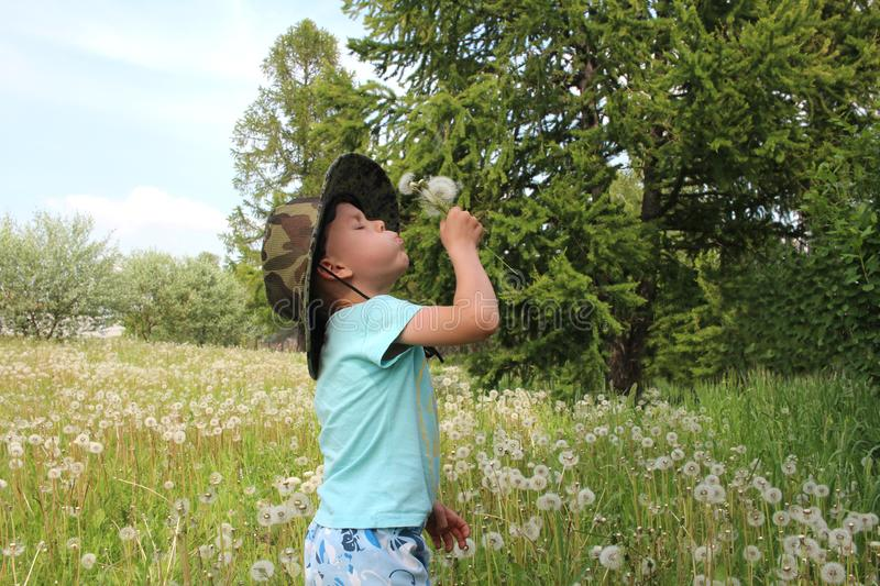 A boy in a hat among the grass blowing on dandelions stock photography