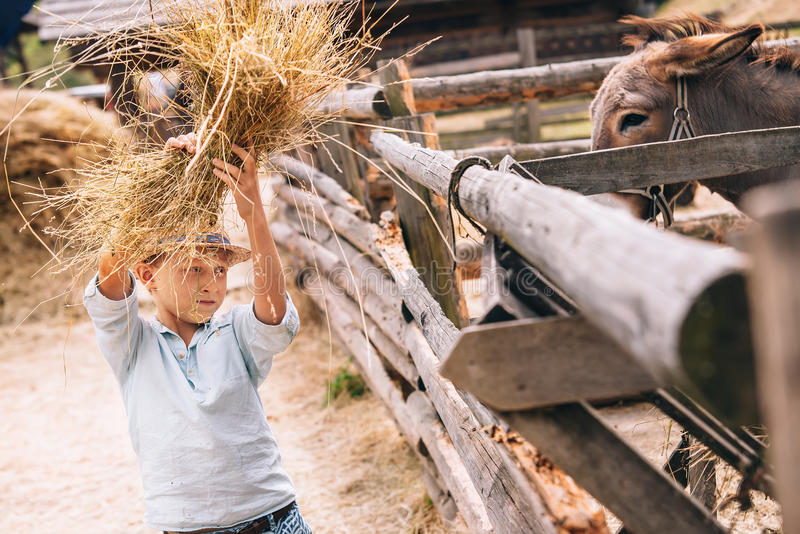 Boy help to feed a donkey at the farm royalty free stock photography