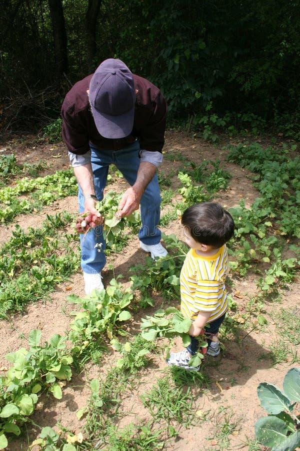 Boy Helping Grandpa In The Garden stock photo