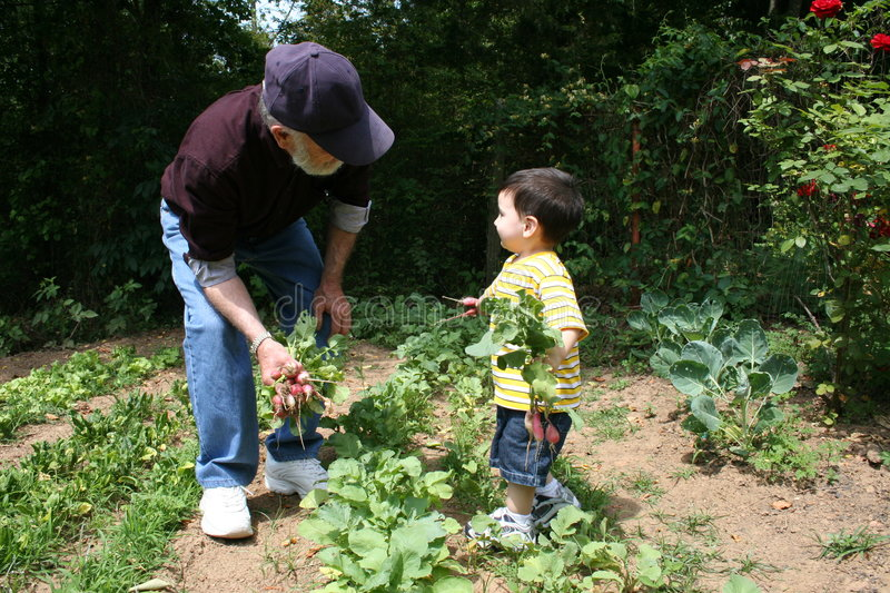 Boy Helping Grandpa In The Garden stock image