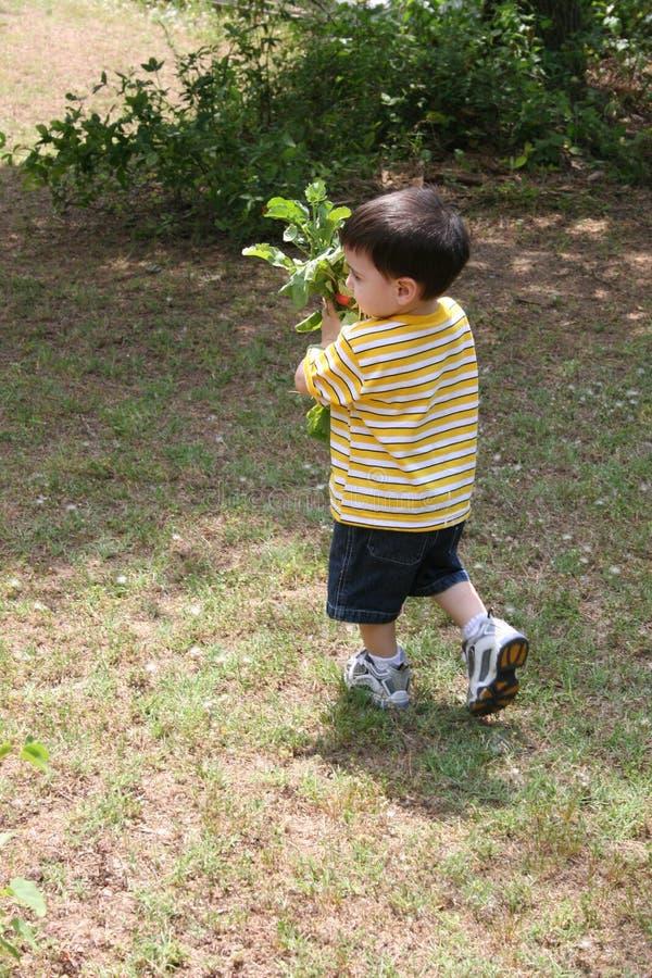 Boy Helping Grandpa In The Garden royalty free stock photo