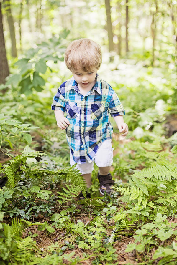 Boy hiking. A toddler boy hiking in the woods royalty free stock photo