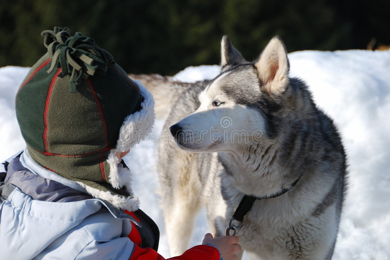 Download A Boy And His Dog In The Snow Stock Photo - Image: 5213672