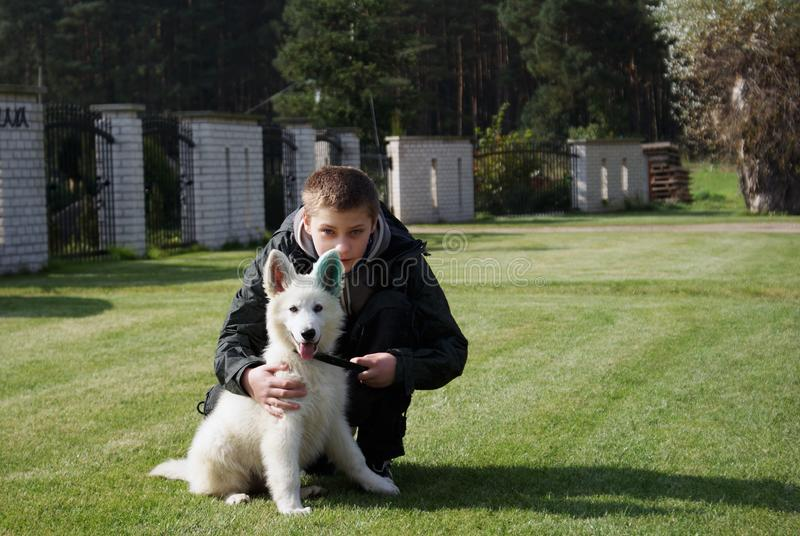 Download Boy with his lovely puppy stock photo. Image of animal - 17464954