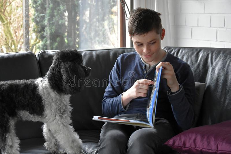 Boy and his poodle dog looking photo album royalty free stock images