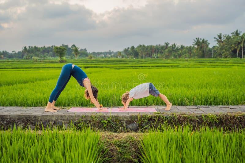 Boy and his yoga teacher doing yoga in a rice field stock photos