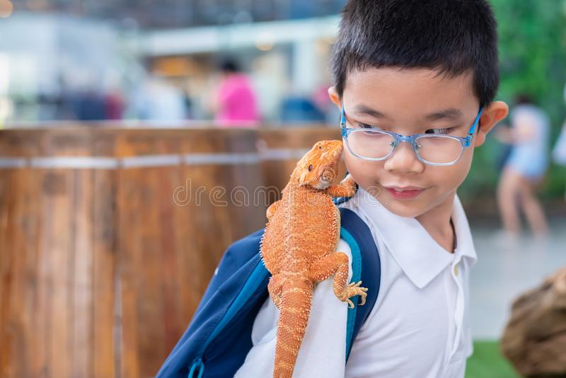 boy hold Bearded Dragon on shoulder royalty free stock image