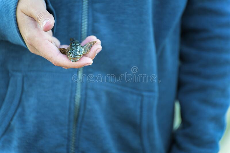 Boy hold tiny fish in his hand stock photo