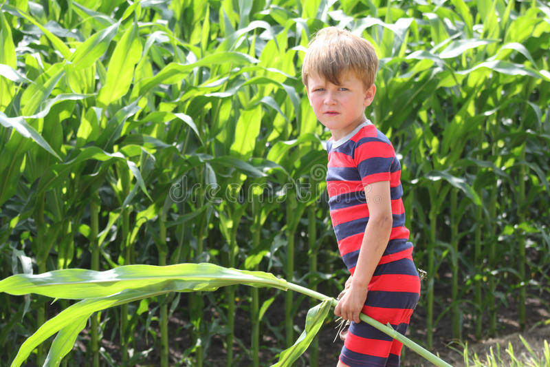 Boy holding a corn stalk in front of field of crops royalty free stock photos