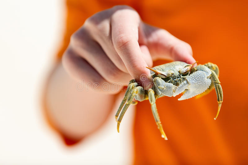 Boy holding crab. Close up of boy holding crab at beach royalty free stock photography