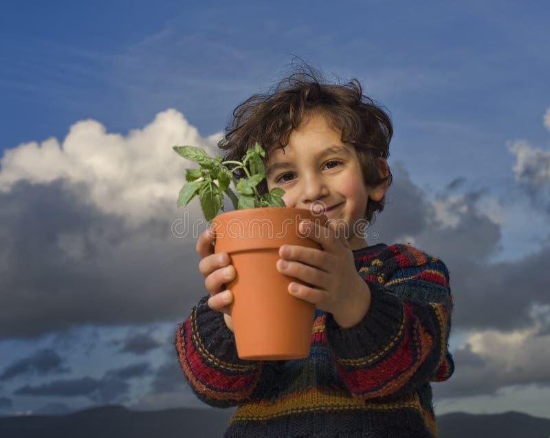 Boy holding plant royalty free stock photos
