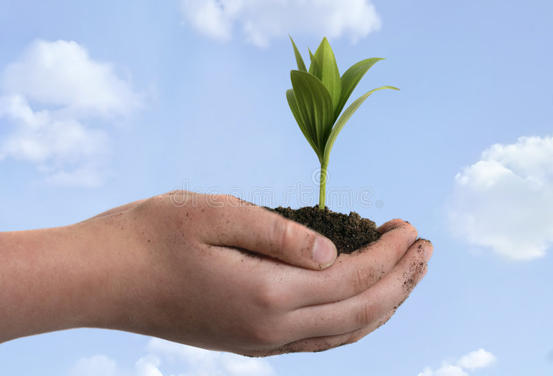 Boy holding seedling in cupped. Hands, close up on hands stock images