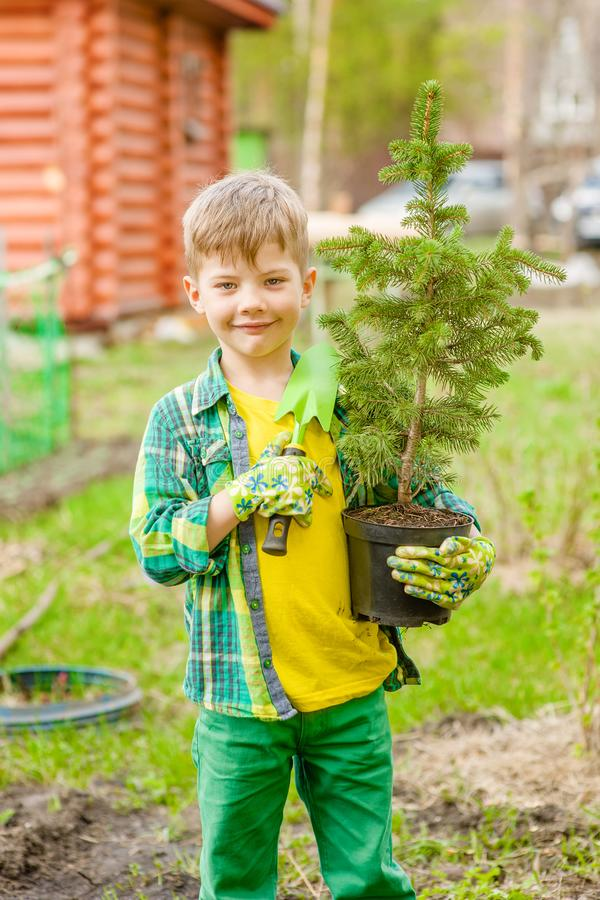 Boy holding a tree seedling in hands stock photos