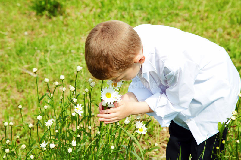 The boy holds hands flowers of a camomile stock photography