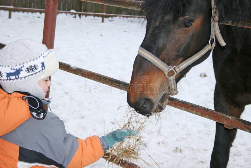 Boy with horse royalty free stock photos