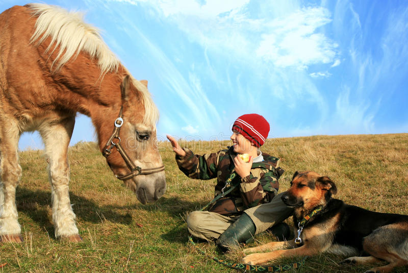 Boy, horse and dogs stock photo