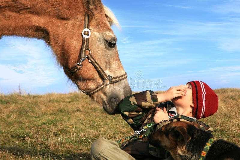 Download Boy, horse and dogs stock photo. Image of farming, cute - 21926560