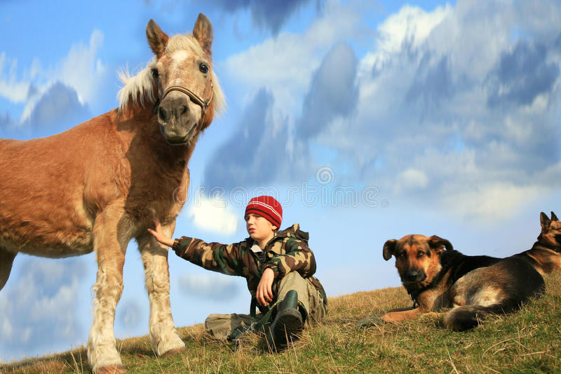 Boy, horse and dogs stock photos