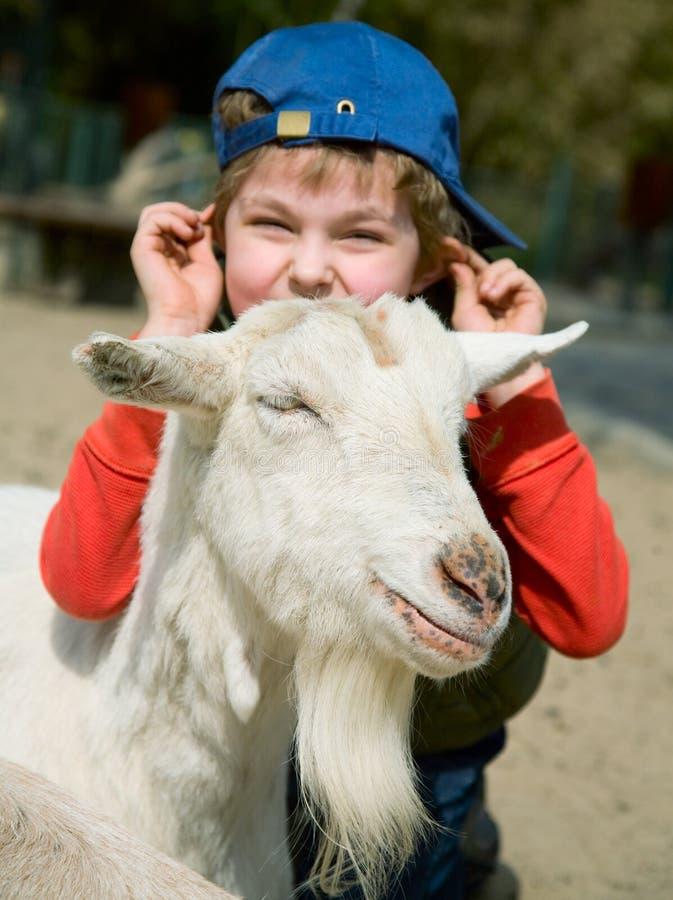 Boy hugging a goat stock images