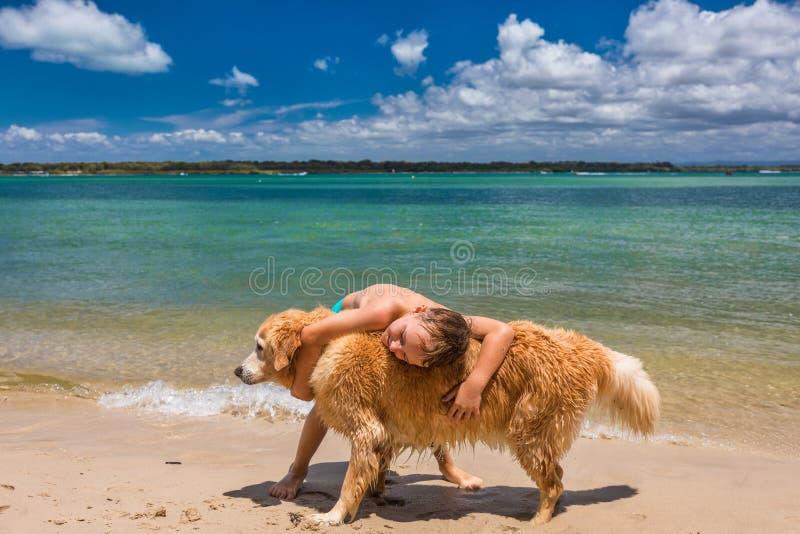 A boy hugging golden retriever on the beach stock image
