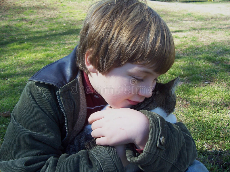 Boy hugging gray kitten royalty free stock photos