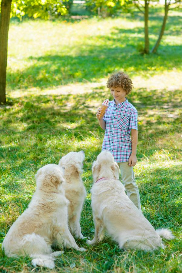 Boy with an ice-cream. Stands in the front of three dogs. Little child looks down with a smile. Great time spent with favorite pets stock images