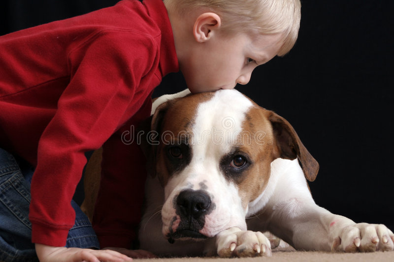 Boy kissing dog. A little boy loves his new cute puppy, an American Bulldog