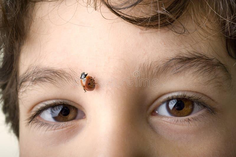 Download Boy with ladybug stock image. Image of ethnicity, comic - 14135167