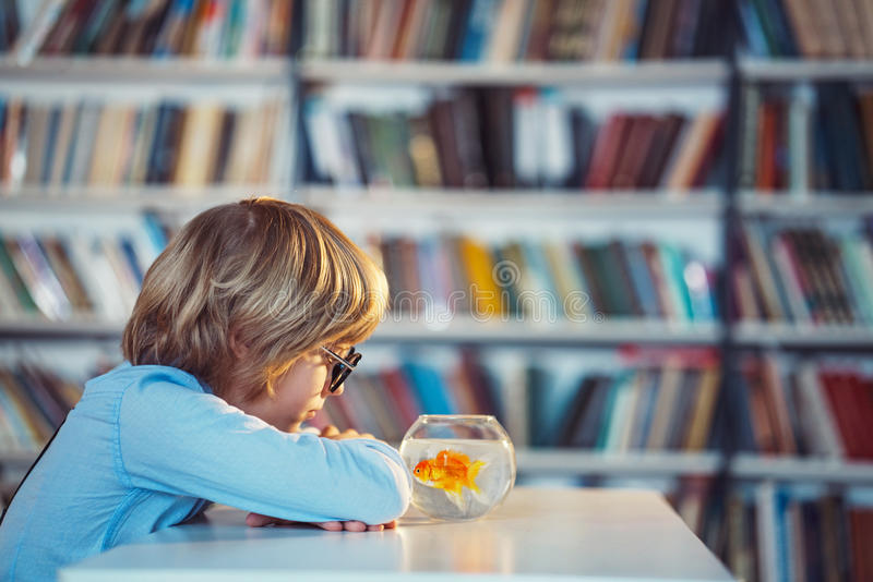 Boy in library royalty free stock photos