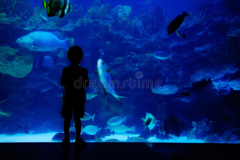 Boy looking at fishes in aquarium stock photos