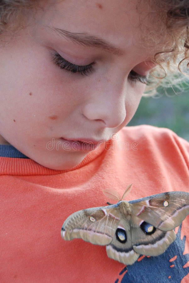 Boy looking at moth stock images