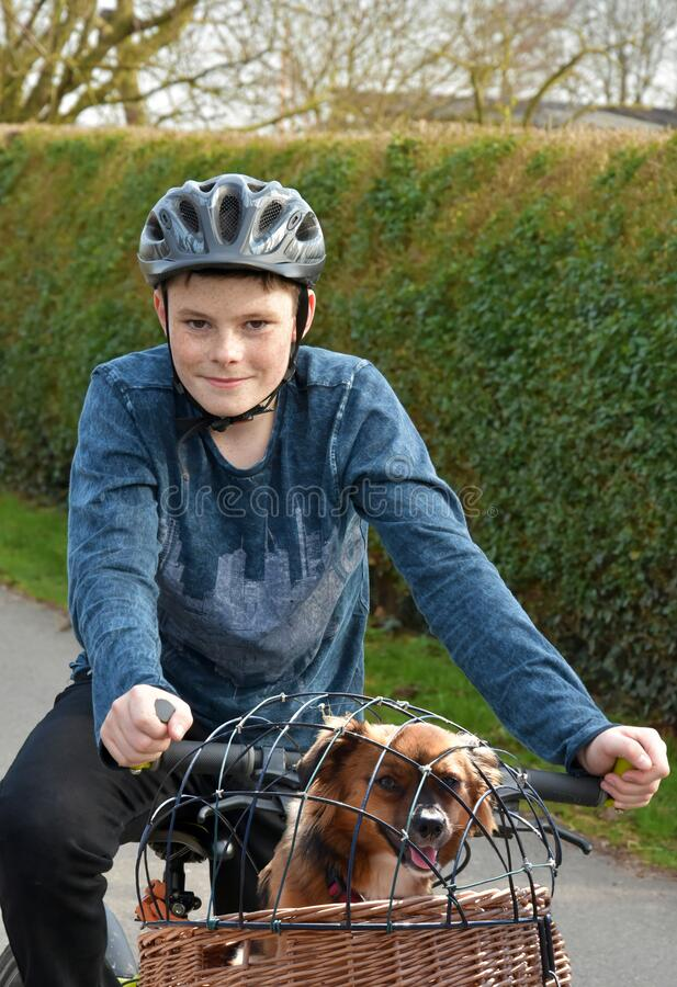 Boy transports his dog in a bike basket stock photography