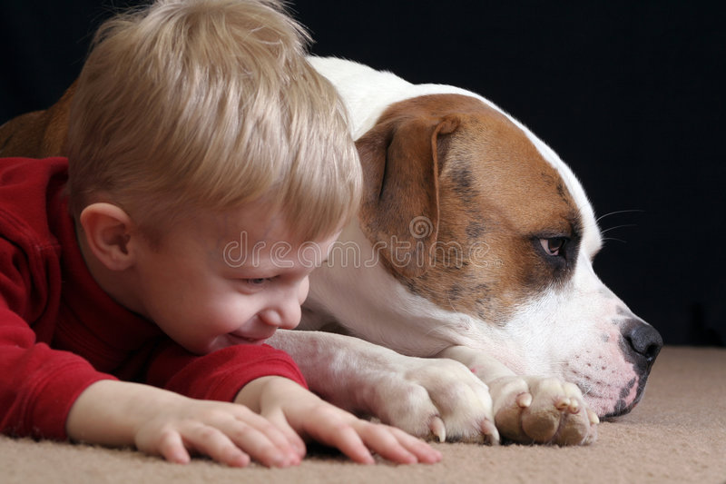 Boy mimics dog. A little boy lays down like her cute puppy, an American Bulldog