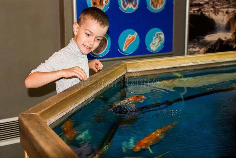 Boy near the aquarium royalty free stock photography