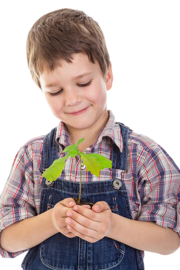 Boy with oak sapling in hands. Smiling boy with oak sapling in hands, isolated on white royalty free stock photo