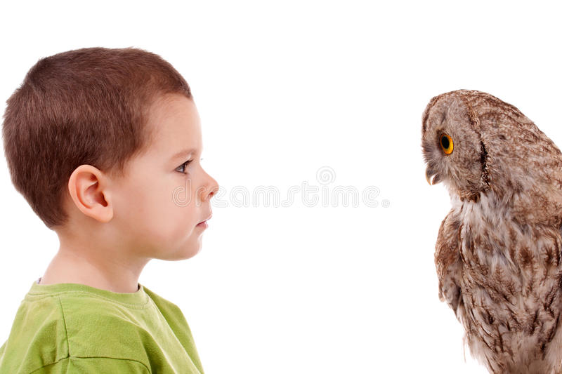 Boy observing owl. Young boy observing young owl, isolated in white stock photos