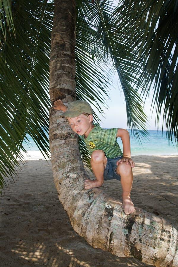 Boy On Palm Tree Stock Photos