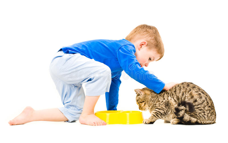 Boy petting a cat stock photo